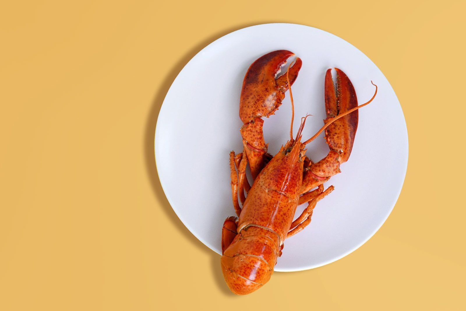 3 façons simples de cuire un homard parfait