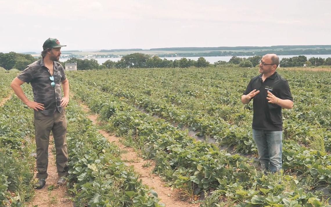 Fraises du Québec : du champ à l'assiette dans la même journée!